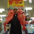 2006 3/11 金沢八景港 一之瀬丸 アコウ船