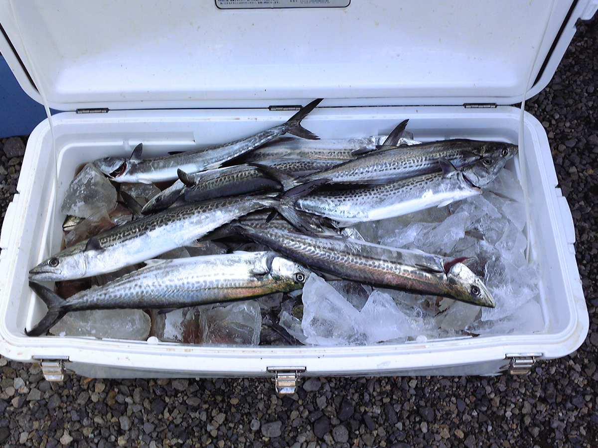 3月21日 新潟 鯛紅丸 サワラジギング