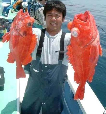 アコウダイとは、こんな魚